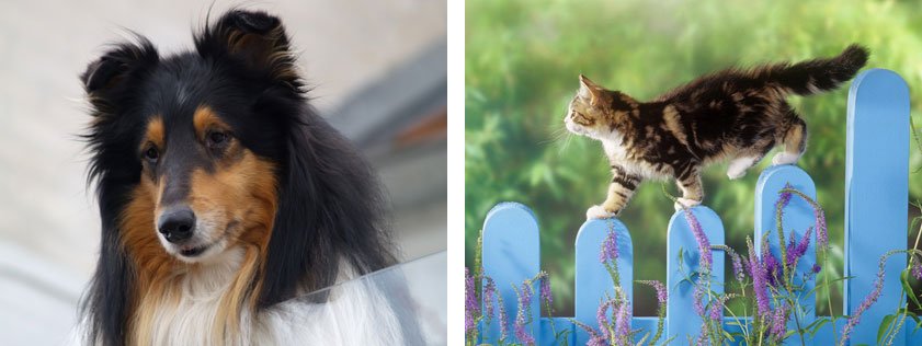 BOTTOM-IMAGE-pets